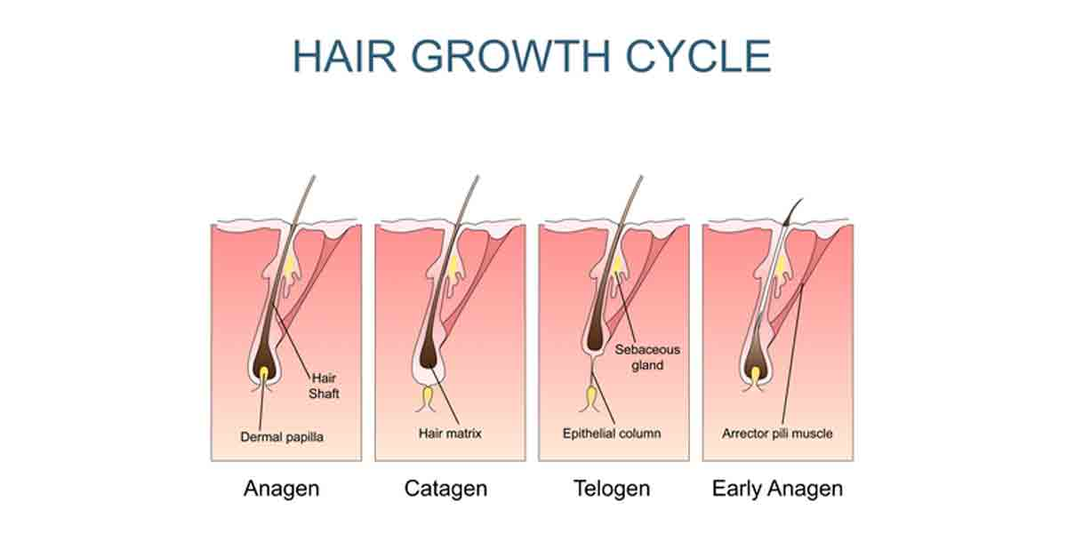 Out hairs of grow one follicle why multiple do Hair Regrowth