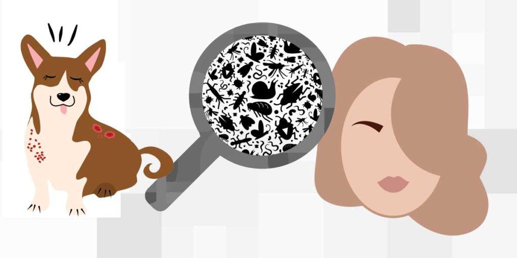 pets and hair loss